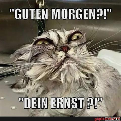 Guten-Morgen-Bilder-Lustig_12_948d9