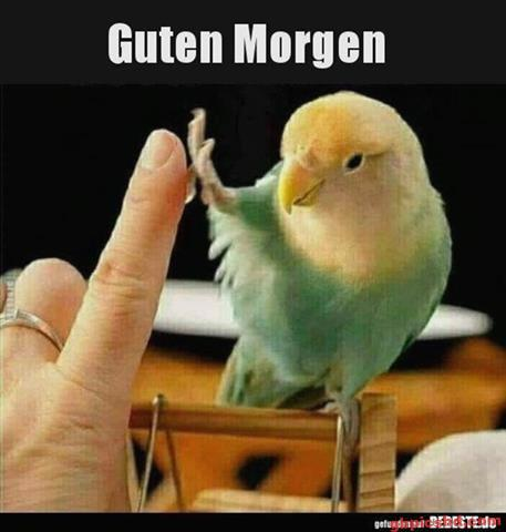 Guten-Morgen-Bilder-Lustig_13_b66bb