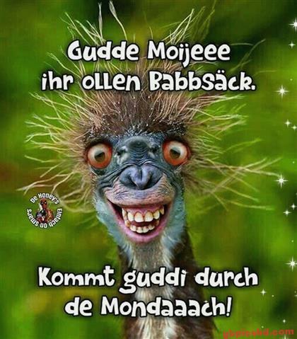 Guten-Morgen-Bilder-Lustig_25_59f84