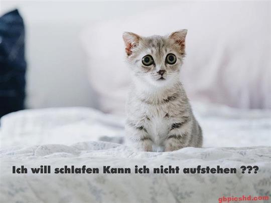 Guten-Morgen-Bilder-Lustig_28_d83bf
