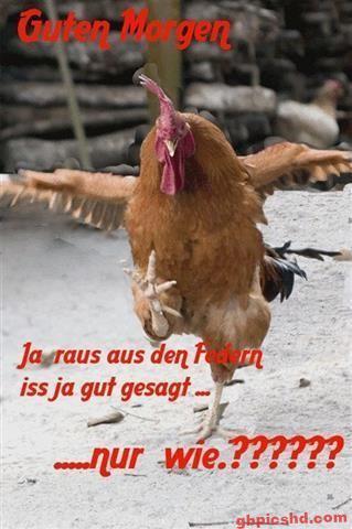 Guten-Morgen-Bilder-Lustig_32_7422f