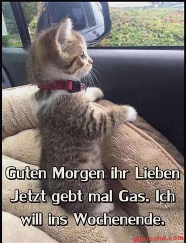 Guten-Morgen-Bilder-Lustig_3_6bc63