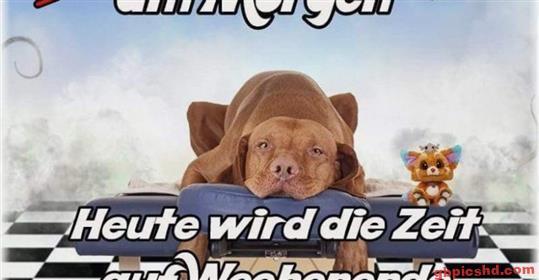 Lustige-Guten-Morgen-Bilder_25_aaeee