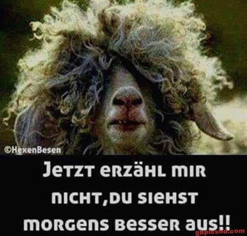 Lustige-Guten-Morgen-Bilder_31_0b419