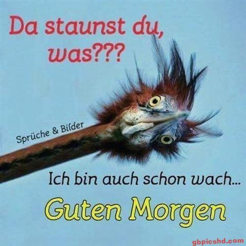Lustige-Guten-Morgen-Bilder_5_cf6f7