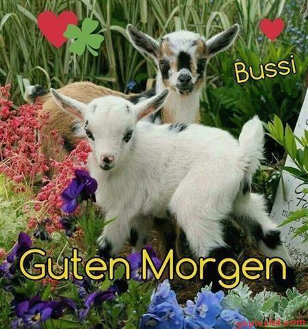 guten-morgen-kuss_30