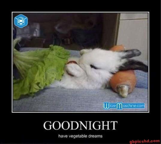lustige-gute-nacht-bilder_16
