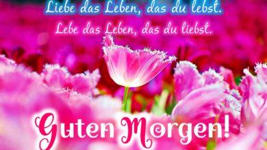 Photo of Gute Nachmittag Bilder