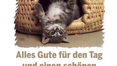 Photo of Lustige Bilder Dienstag Nachmittag